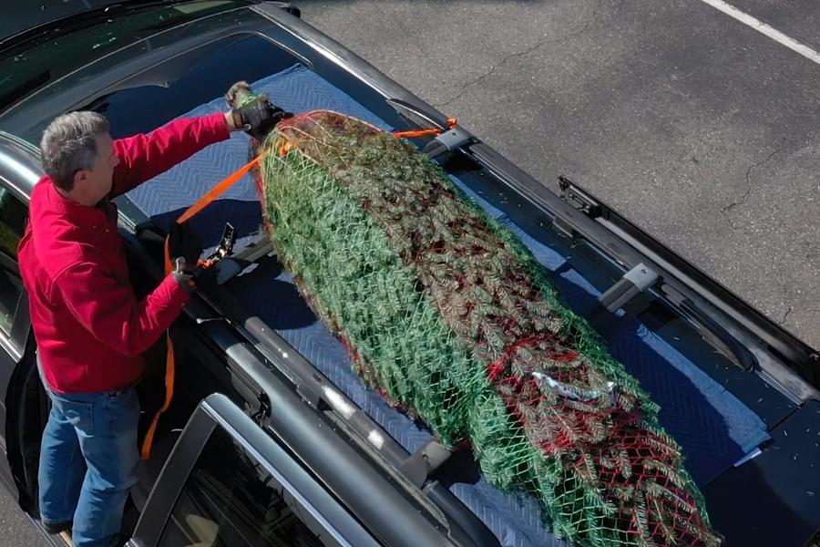 Transporting a Christmas Tree