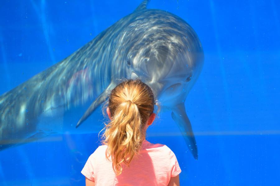 Boston Adventures - New England Aquarium or Whale Watch
